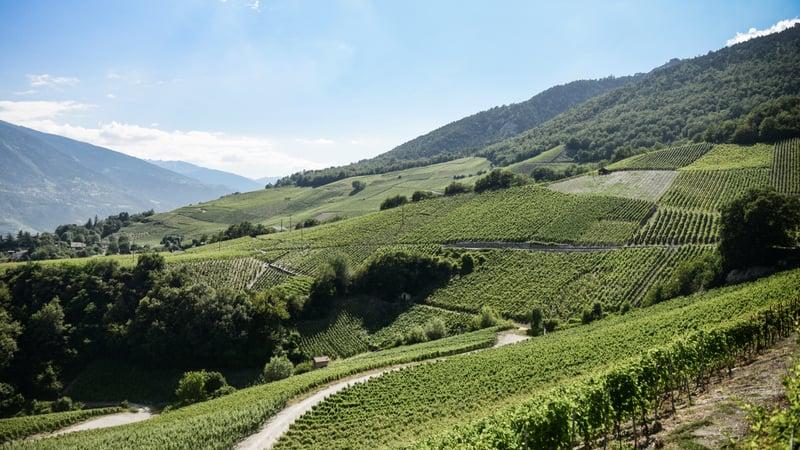 Valais vineyards